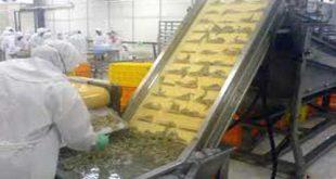 قیمت دستگاه خشک کن ماهی