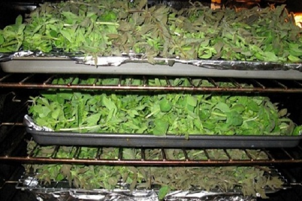 انواع دستگاه خشک کن گیاهان دارویی