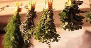 خرید دستگاه خشک کن گیاهان دارویی