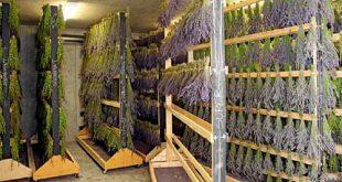 دستگاه خشک کن داروهای گیاهی